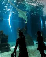Génova, Italia, 2 de junio de 2015 - Personas no identificadas en el acuario de Génova. El acuario de Génova es el acuario más grande de Italia y uno de los más grandes de Europa. foto