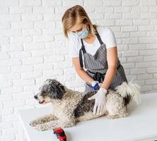 Blond woman in a mask and gloves grooming a dog at home photo