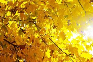 Yellow, orange and red autumn leaves in beautiful photo