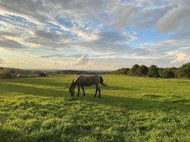 paisaje de campo con caballo sobre césped verde foto