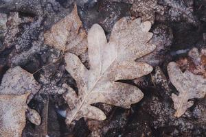 Autumn leaves frozen under transparent clear ice. photo