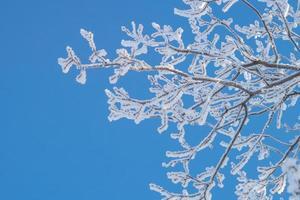 rama cubierta de escarcha en un día claro y helado. foto