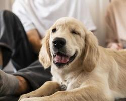 man dog indoors photo