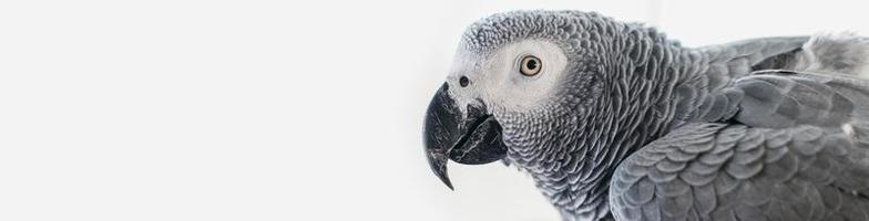 hombre barbudo acariciando lindo pájaro foto