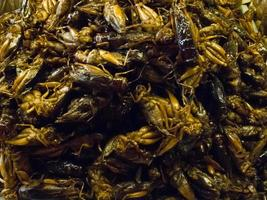 Crispy fried insects  are regional delicacies in many Asian countries like Thailand. photo