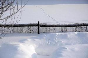 huellas de gato en la nieve. el gato caminaba por la corteza de nieve de jardín en jardín a través de la cerca. foto