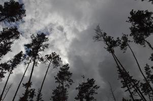 textura de bosque de árboles y plantas de verano en europa foto