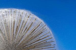 Dandelion fountain close up on blue sky background photo