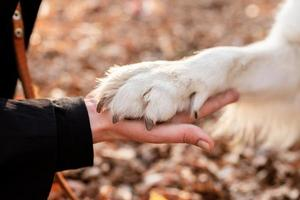 blond woman holding a paw of her dog photo