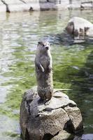 Otter sunbathing in nature photo