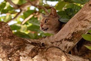 Feral domestic cat photo