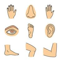 Conjunto de iconos de colores de partes del cuerpo humano. manos masculinas y femeninas, nariz, ojos, pies, orejas, codo, rodilla. ilustraciones vectoriales aisladas vector