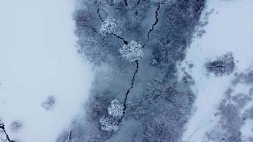 Trees and plants in the snowy river valley top aerial view video