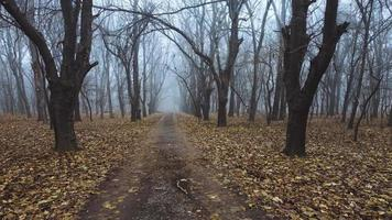 Foggy alley in the winter forest video