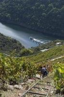 Lugo,Galicia,Spain,2021. Elevators to save slopes of up to 80 percent in heroic viticulture photo