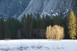 Ahwanee Meadow, Yosemite National Park photo