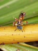 Small Jatai bee photo