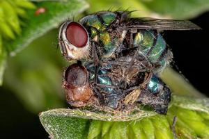 mosca de golpe muerto foto