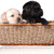 Puppies_homesmall