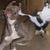 Cat_kicking_dog