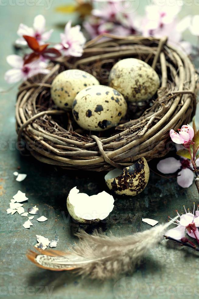 uova di Pasqua di quaglia in un nido foto