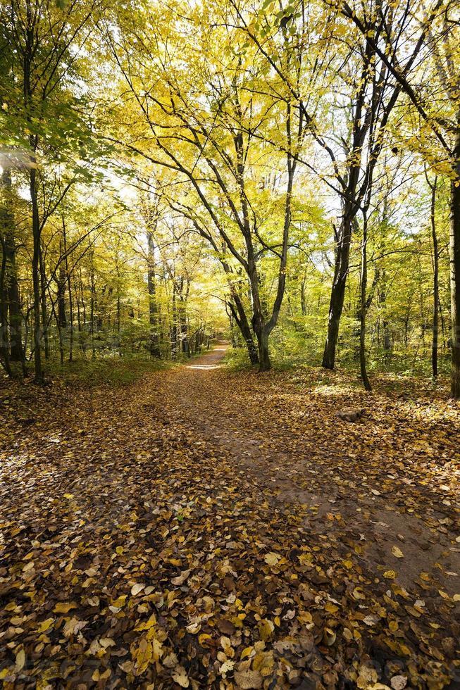 foresta d'autunno. foresta foto