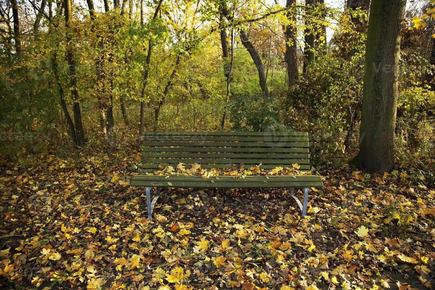 panchina della foresta d'autunno nella foresta foto