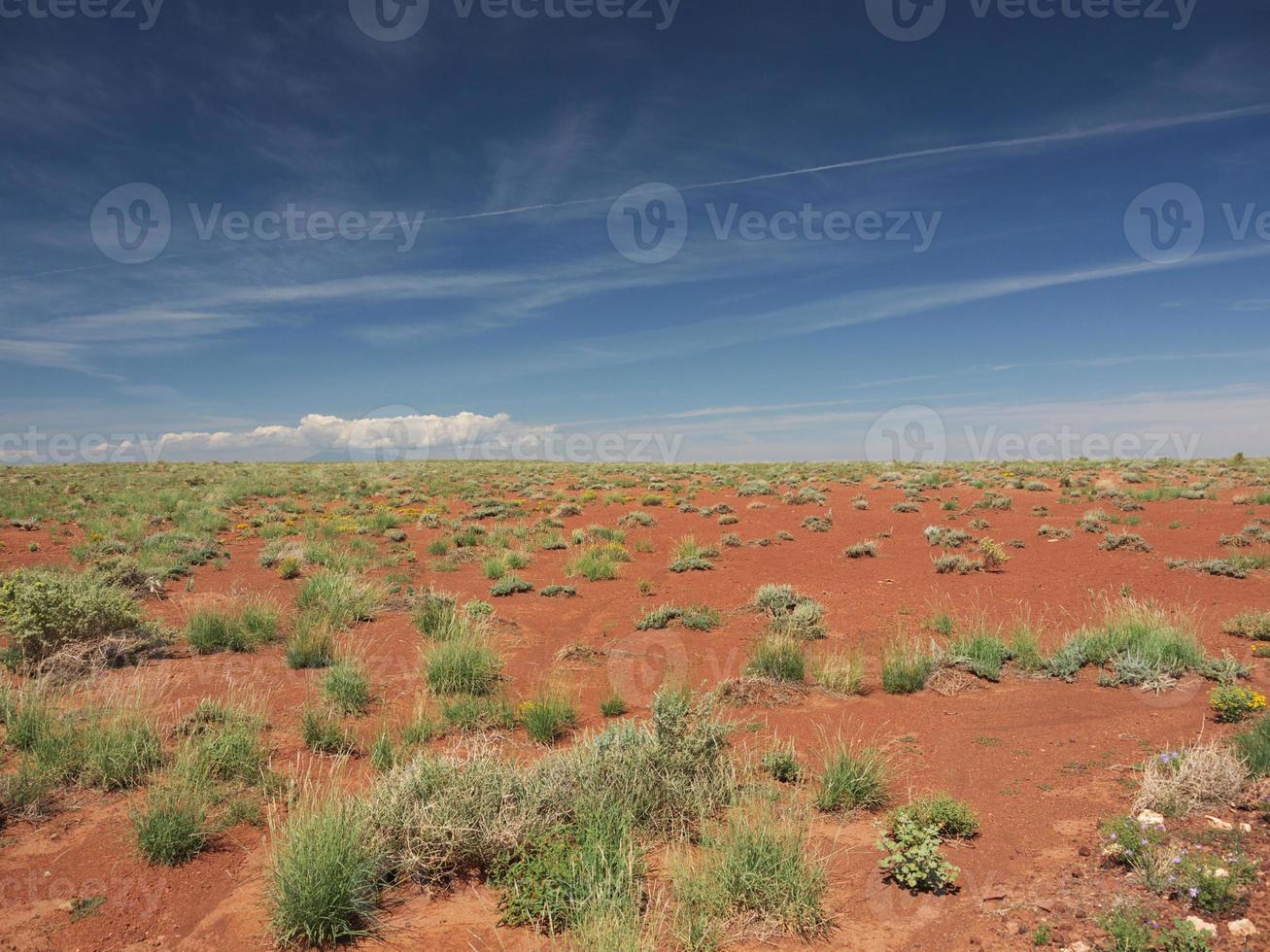 deserto dell'Arizona foto