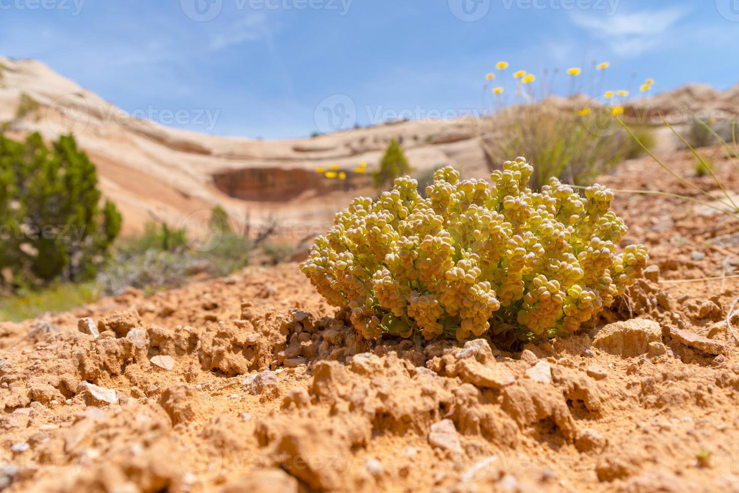 vegetazione del deserto foto