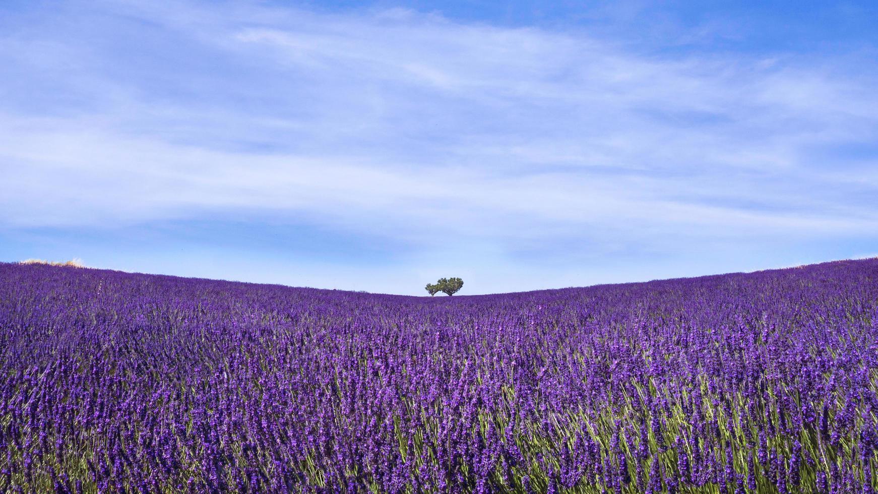 vista del paesaggio minimalista del campo di lavanda in Provenza, Francia foto
