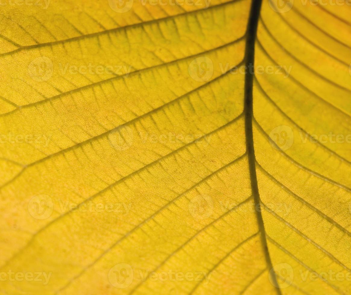 dettaglio giallo foglia d'autunno foto