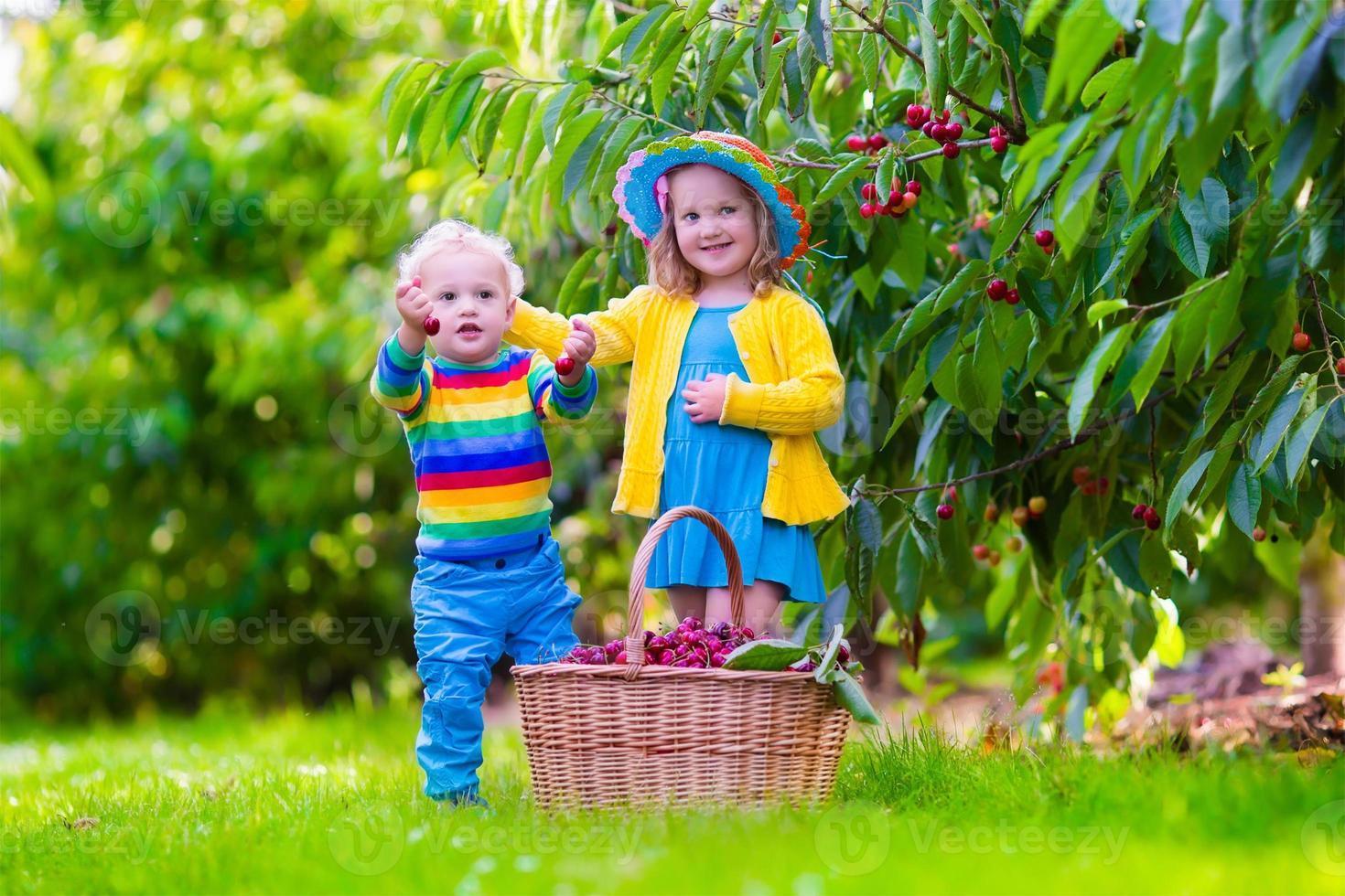 adorabili bambini che raccolgono frutti di ciliegio in una fattoria foto