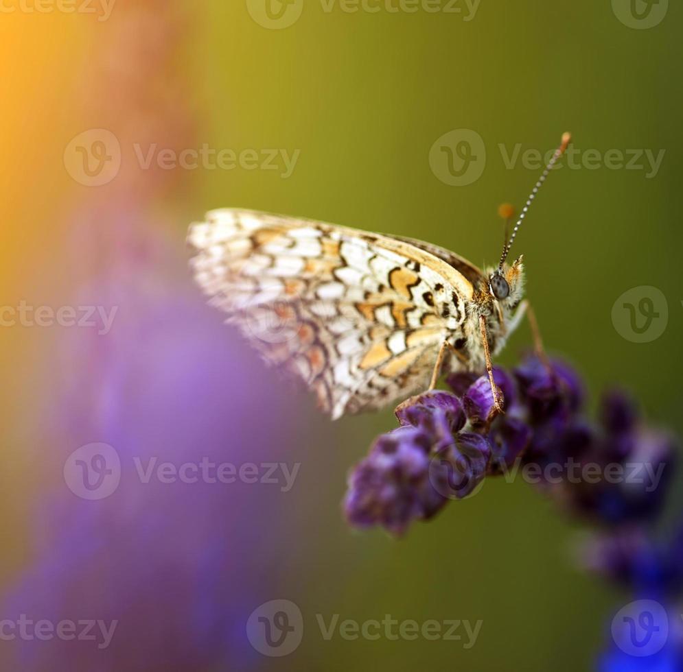 foto d'epoca di farfalla