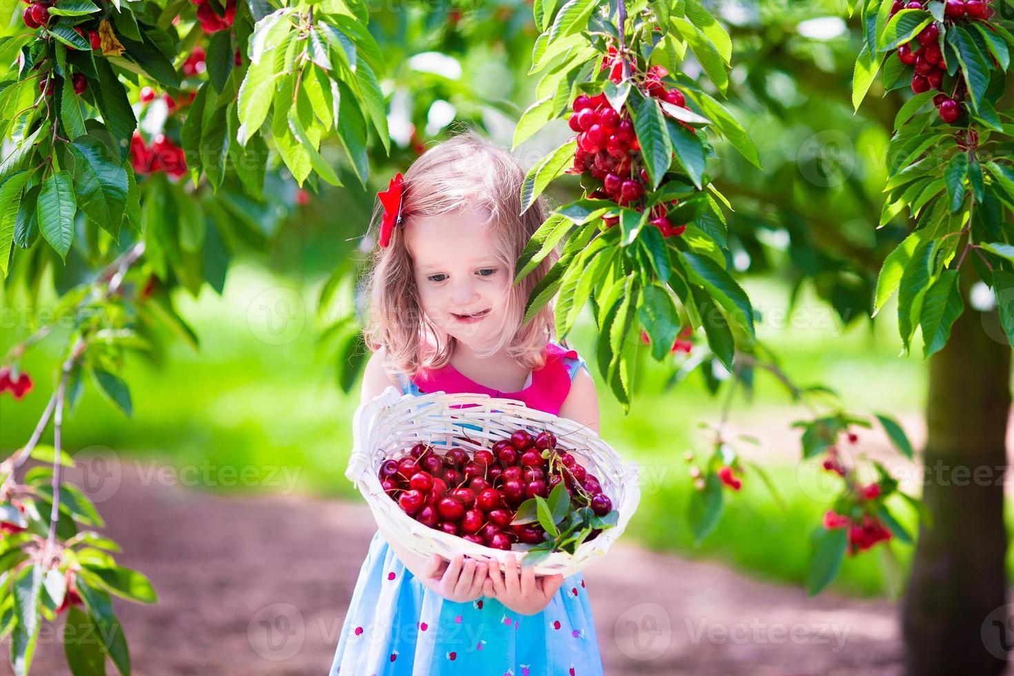 bambina che raccoglie la bacca fresca della ciliegia nel giardino foto