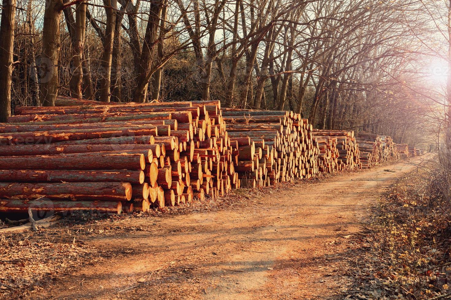 tronchi di legno foto