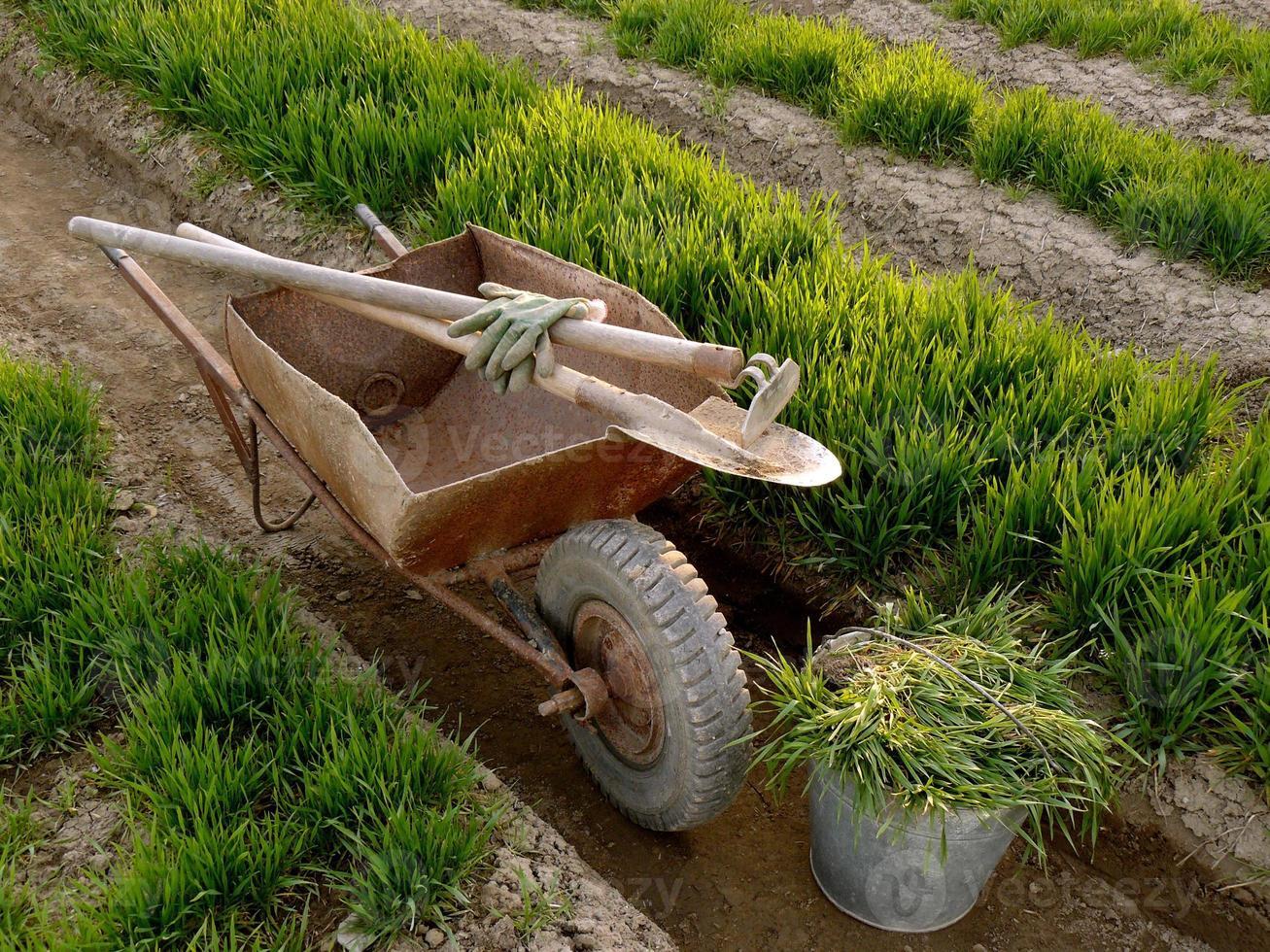 carriola con strumenti in un giardino di primavera foto