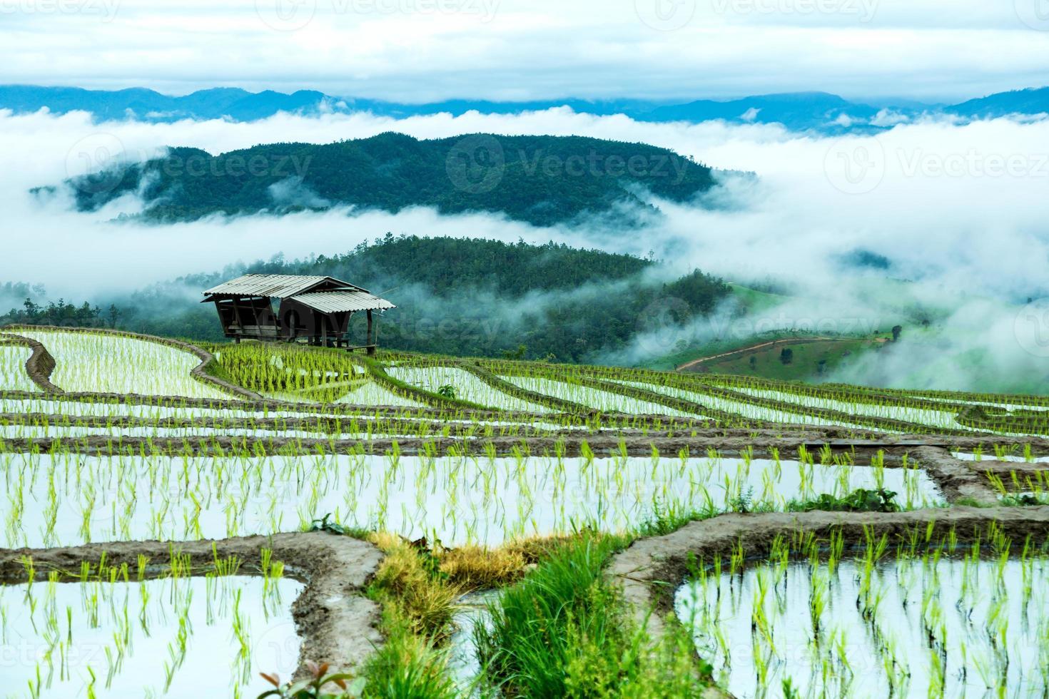 agricoltura tradizionale a Cheing Mai, Tailandia del Nord. foto