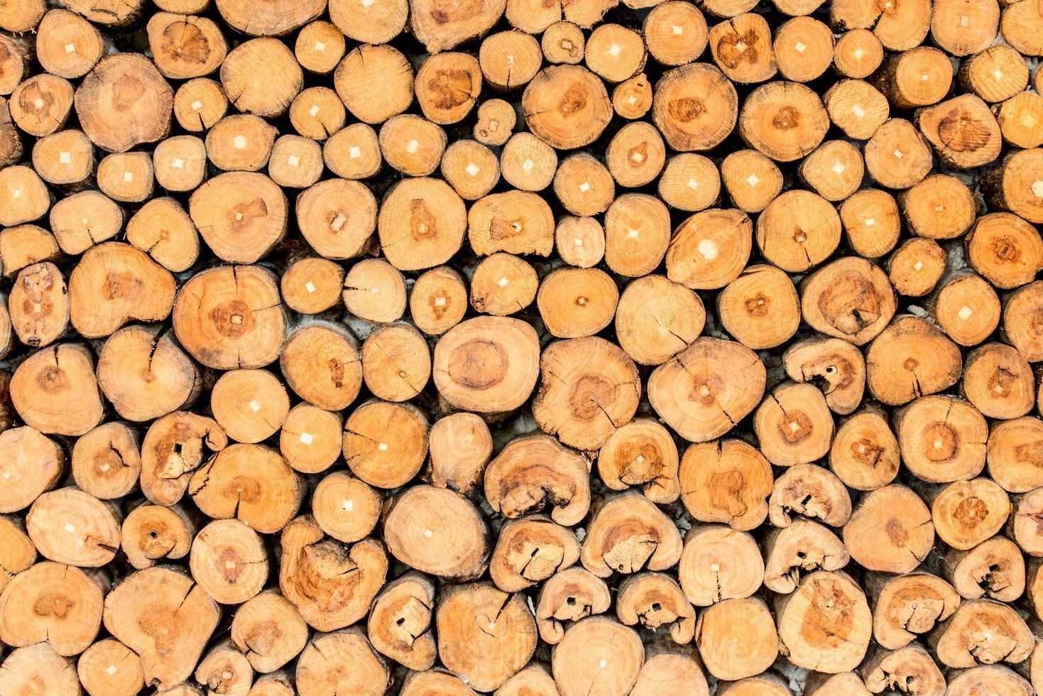 ceppi di albero di fondo foto