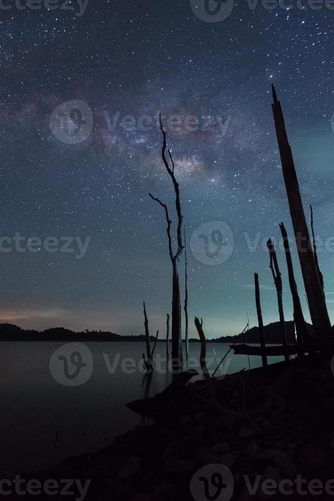alberi morti e via lattea sullo sfondo. foto