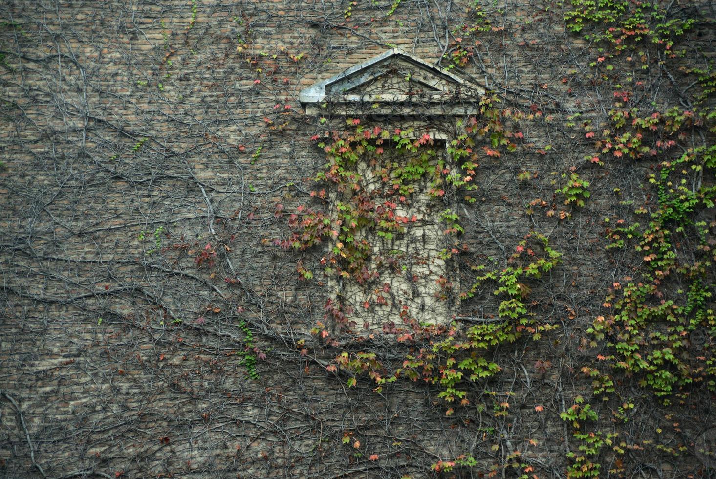 autunno e architettura foto