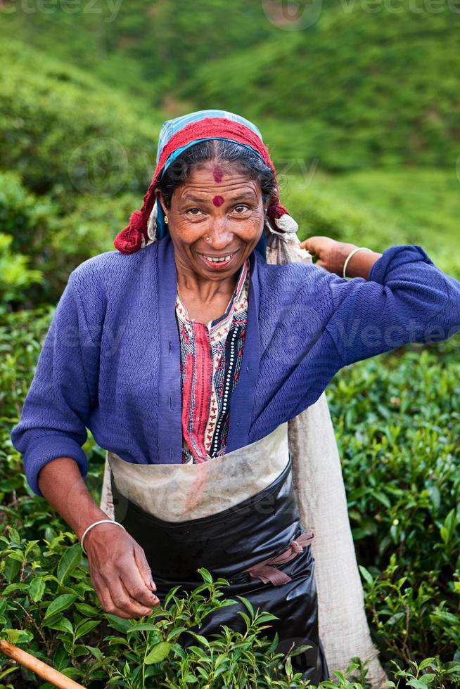 raccoglitori di tè tamil che raccolgono foglie, sri lanka foto