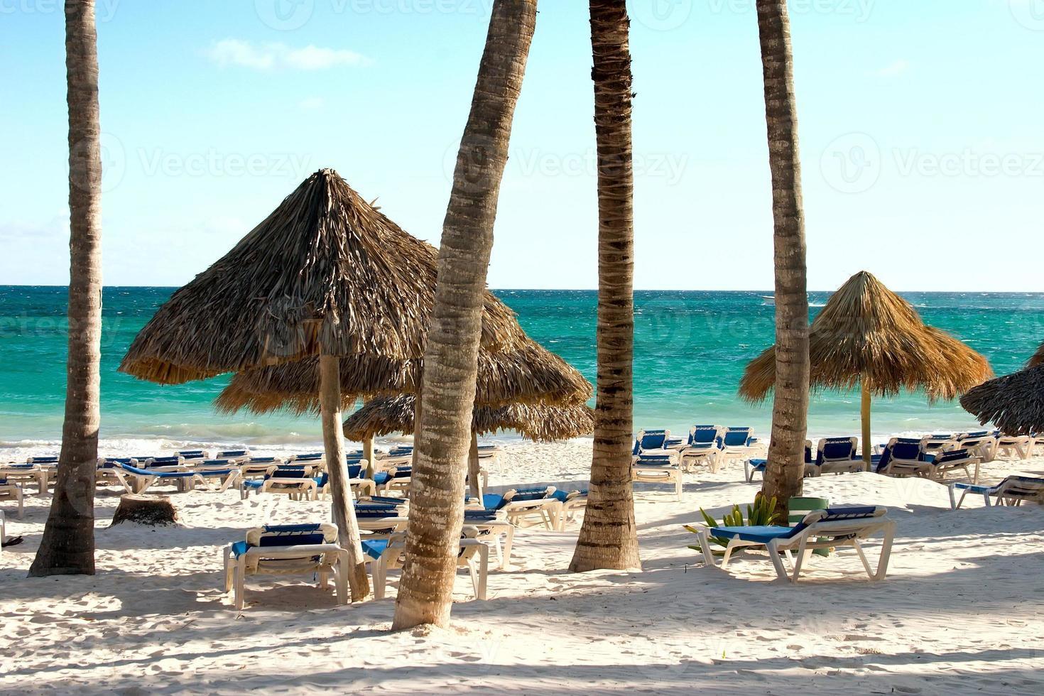 sabbia, oceano e palme foto