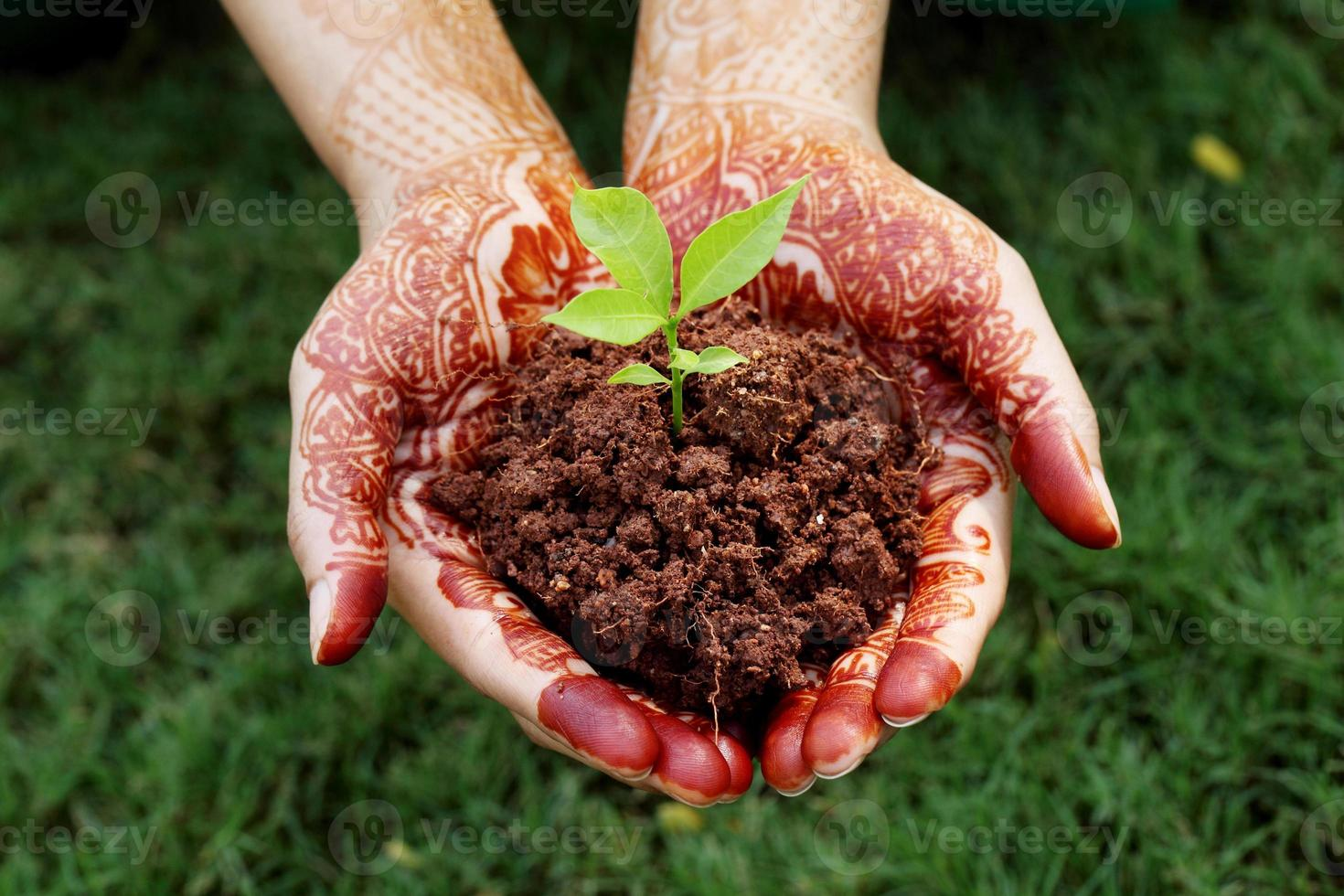 mani che tengono piccola pianta - nuova vita foto