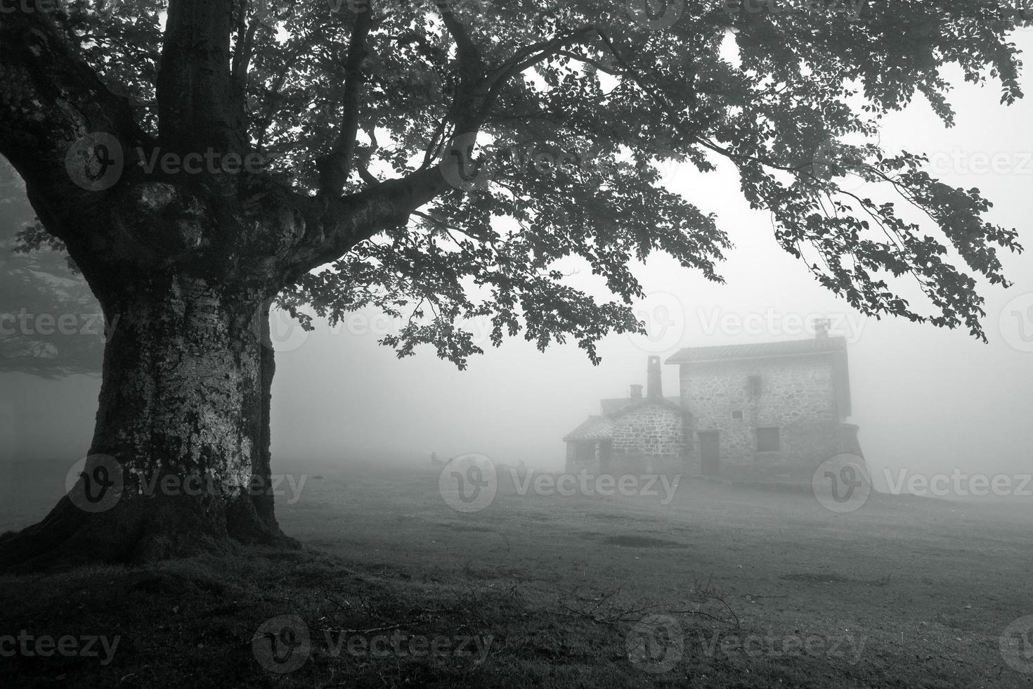 casa misteriosa nella foresta nebbiosa foto