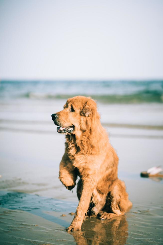cane a tre zampe seduto sulla spiaggia foto