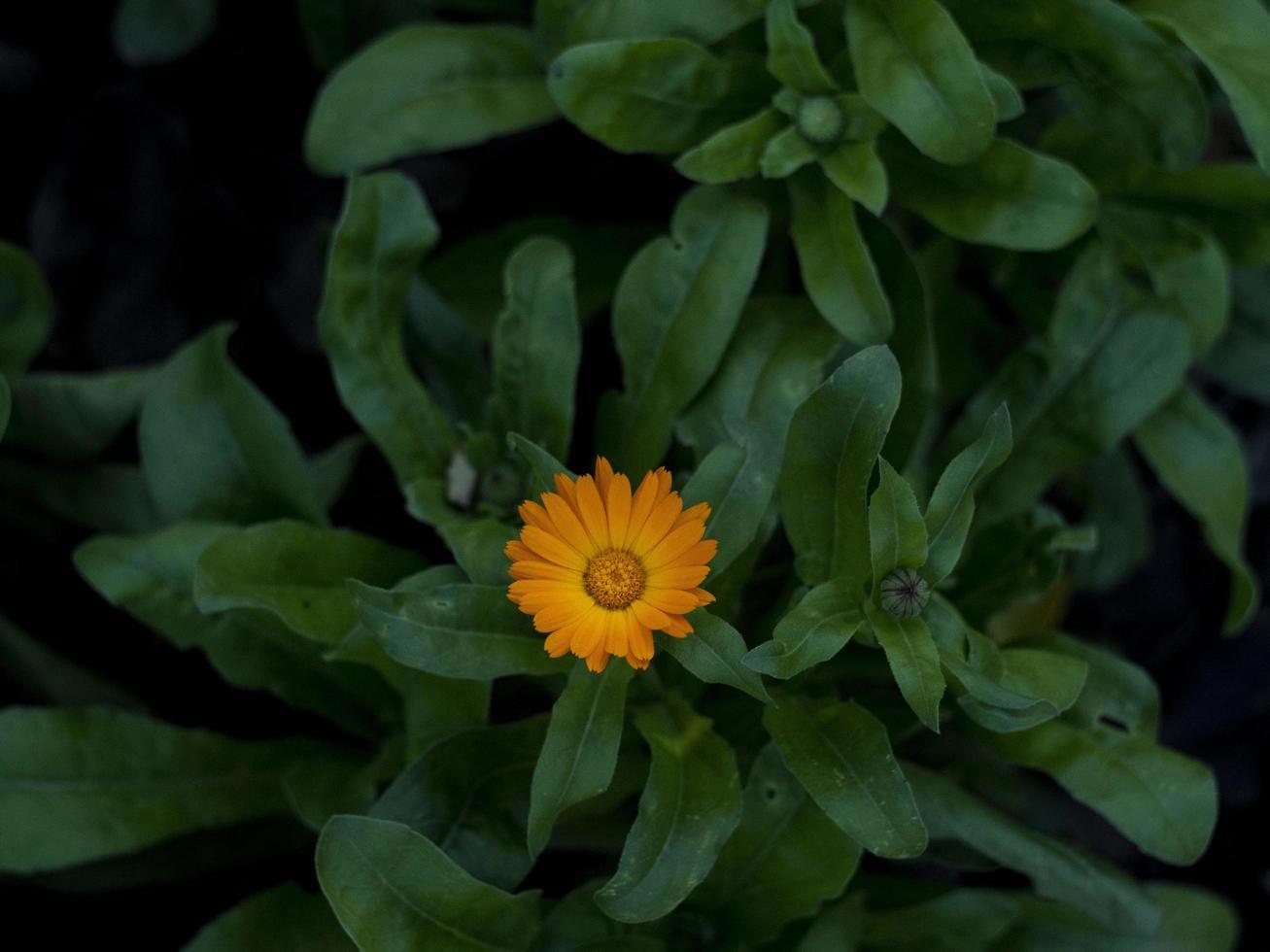 bellissimo piccolo fiore arancione foto
