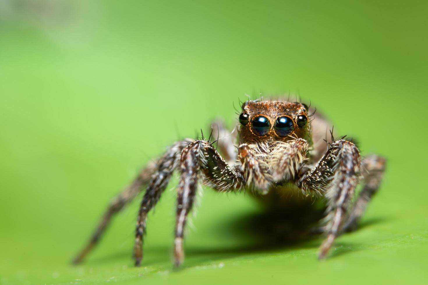 macro ragno su foglia verde brillante foto