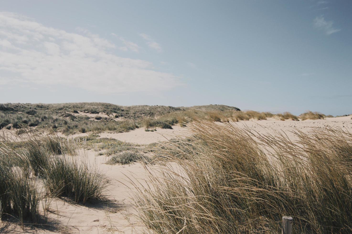 dune di sabbia della spiaggia in Portogallo foto