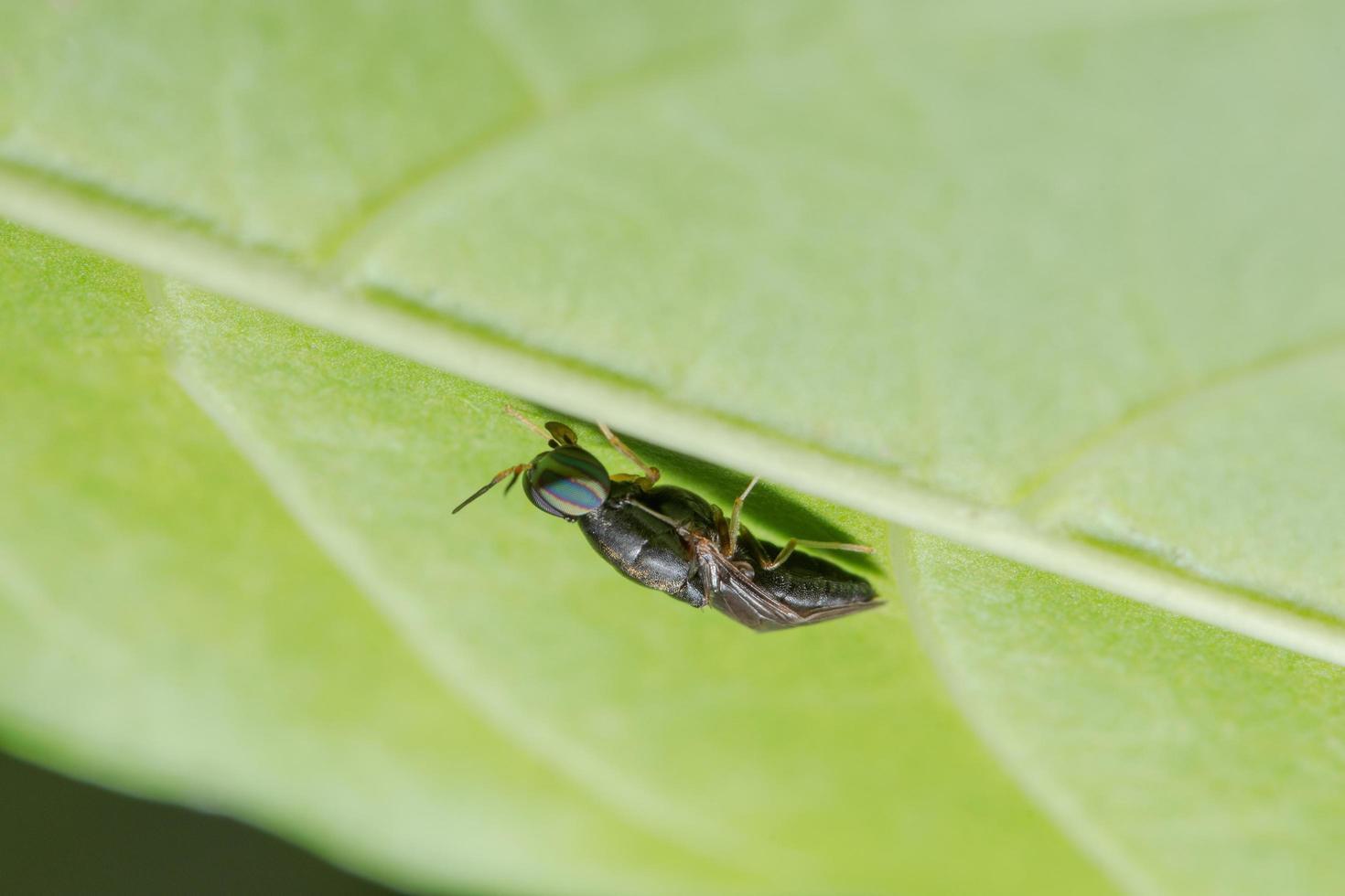 macro insetto su foglia foto