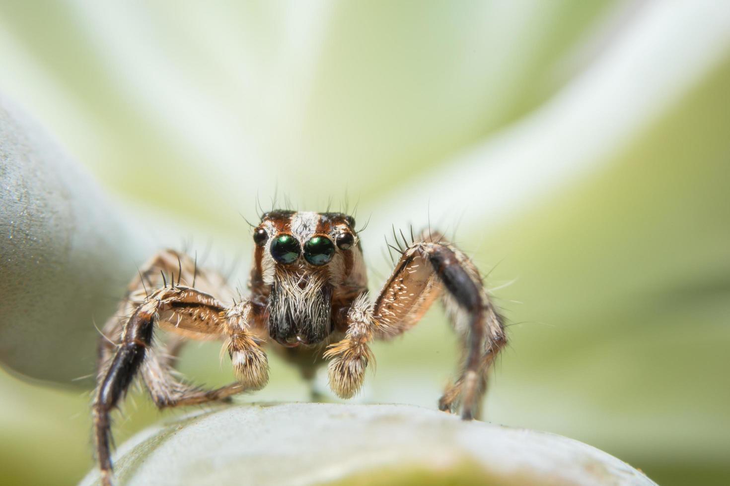 vicino ragno foto